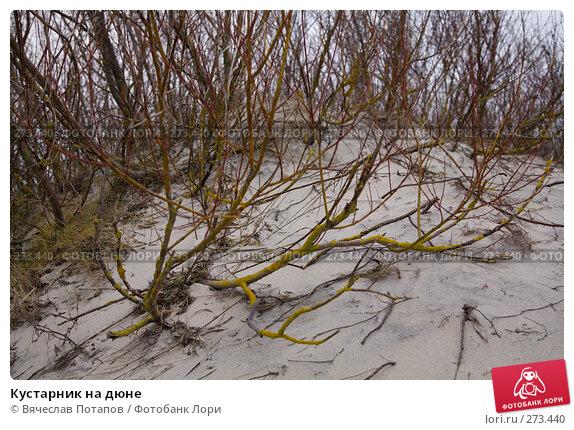 Купить «Кустарник на дюне», фото № 273440, снято 21 декабря 2007 г. (c) Вячеслав Потапов / Фотобанк Лори