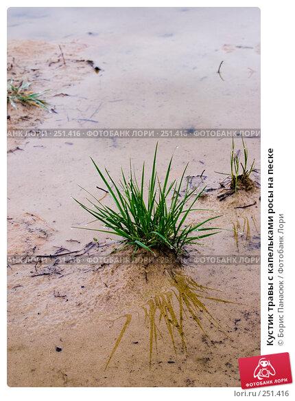 Кустик травы с капельками росы на песке, фото № 251416, снято 11 апреля 2008 г. (c) Борис Панасюк / Фотобанк Лори