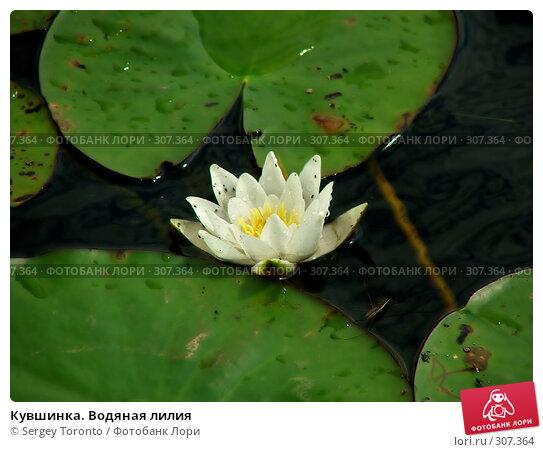 Кувшинка. Водяная лилия, фото № 307364, снято 28 июля 2004 г. (c) Sergey Toronto / Фотобанк Лори