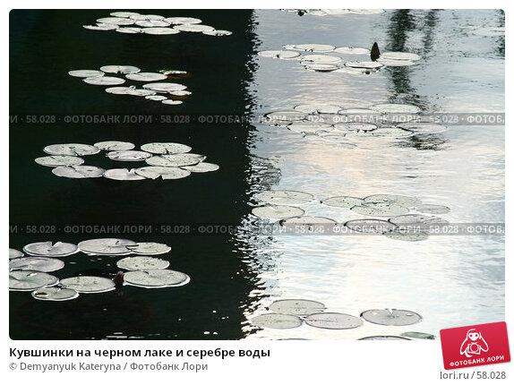 Кувшинки на черном лаке и серебре воды, фото № 58028, снято 3 июля 2007 г. (c) Demyanyuk Kateryna / Фотобанк Лори