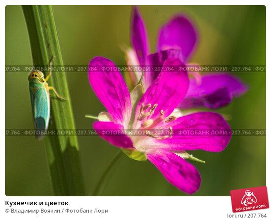 Кузнечик и цветок, фото № 207764, снято 23 июля 2006 г. (c) Владимир Воякин / Фотобанк Лори