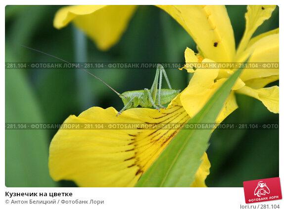 Кузнечик на цветке, фото № 281104, снято 17 июня 2006 г. (c) Антон Белицкий / Фотобанк Лори
