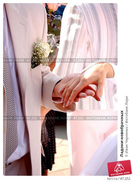 Ладони новобрачных, фото № 47252, снято 13 марта 2005 г. (c) Иван Черненко / Фотобанк Лори