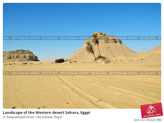 Купить «Landscape of the Western desert Sahara, Egypt», фото № 29223992, снято 26 декабря 2008 г. (c) Знаменский Олег / Фотобанк Лори