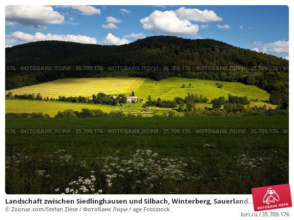 Landschaft zwischen Siedlinghausen und Silbach, Winterberg, Sauerland... Стоковое фото, фотограф Zoonar.com/Stefan Ziese / age Fotostock / Фотобанк Лори