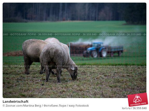 Landwirtschaft. Стоковое фото, фотограф Zoonar.com/Martina Berg / easy Fotostock / Фотобанк Лори