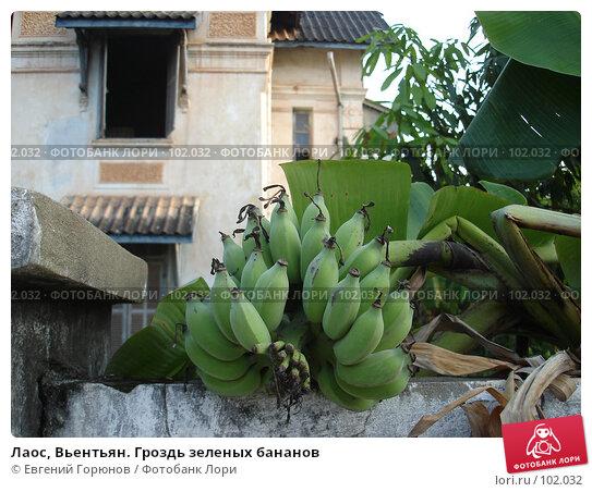 Лаос, Вьентьян. Гроздь зеленых бананов, фото № 102032, снято 1 мая 2017 г. (c) Евгений Горюнов / Фотобанк Лори