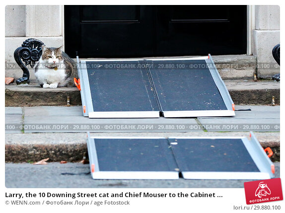 Купить «Larry, the 10 Downing Street cat and Chief Mouser to the Cabinet Office on the steps of No 10 Downing Street as the wheelchair ramp is in place for a visitor...», фото № 29880100, снято 17 января 2018 г. (c) age Fotostock / Фотобанк Лори