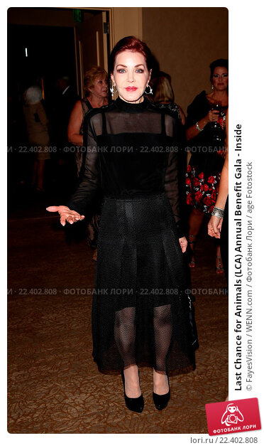 Купить «Last Chance for Animals (LCA) Annual Benefit Gala - Inside Featuring: Priscilla Presley Where: Beverly Hills, California, United States When: 24 Oct 2015 Credit: FayesVision/WENN.com», фото № 22402808, снято 24 октября 2015 г. (c) age Fotostock / Фотобанк Лори
