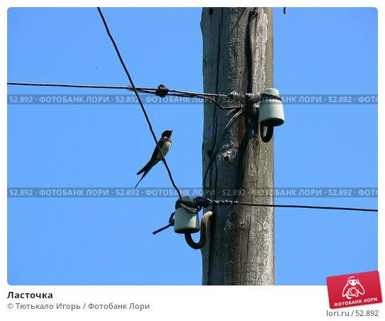 Ласточка, фото № 52892, снято 30 мая 2007 г. (c) Тютькало Игорь / Фотобанк Лори