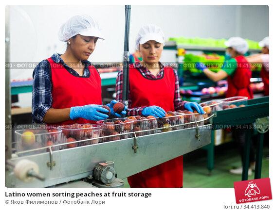Latino women sorting peaches at fruit storage. Стоковое фото, фотограф Яков Филимонов / Фотобанк Лори
