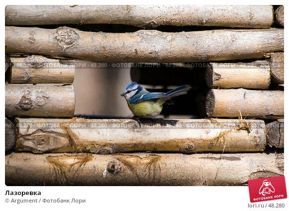 Лазоревка, фото № 48280, снято 9 апреля 2007 г. (c) Argument / Фотобанк Лори