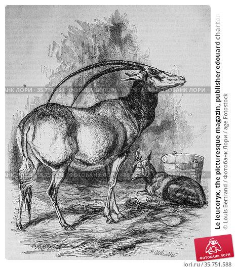 Le leucoryx, the picturesque magazin, publisher edouard charton, 1860. (2009 год). Редакционное фото, фотограф Louis Bertrand / age Fotostock / Фотобанк Лори