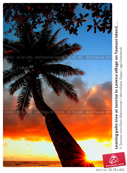 Leaning palm tree at sunrise in Lavena village on Taveuni Island, ... Стоковое фото, фотограф Zoonar.com/Don Mammoser / age Fotostock / Фотобанк Лори