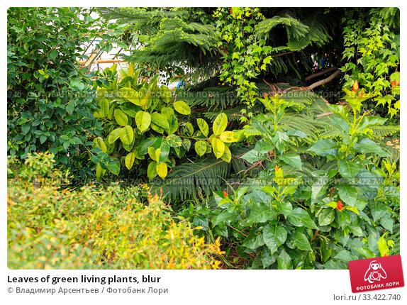 Купить «Leaves of green living plants, blur», фото № 33422740, снято 15 февраля 2020 г. (c) Владимир Арсентьев / Фотобанк Лори