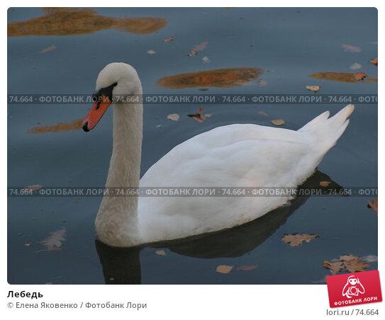 Лебедь, фото № 74664, снято 1 марта 2005 г. (c) Елена Яковенко / Фотобанк Лори