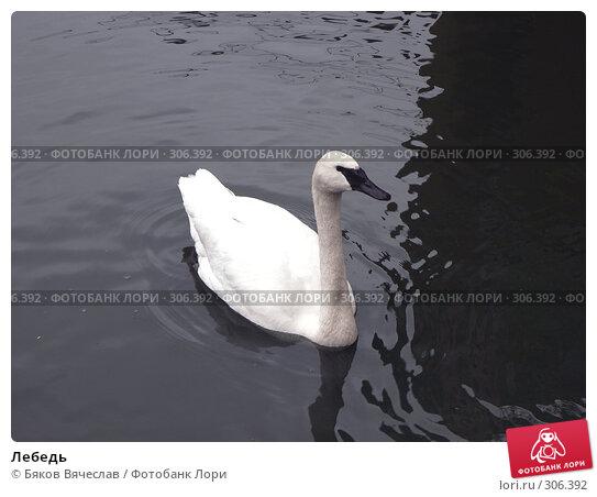 Лебедь, фото № 306392, снято 16 апреля 2008 г. (c) Бяков Вячеслав / Фотобанк Лори