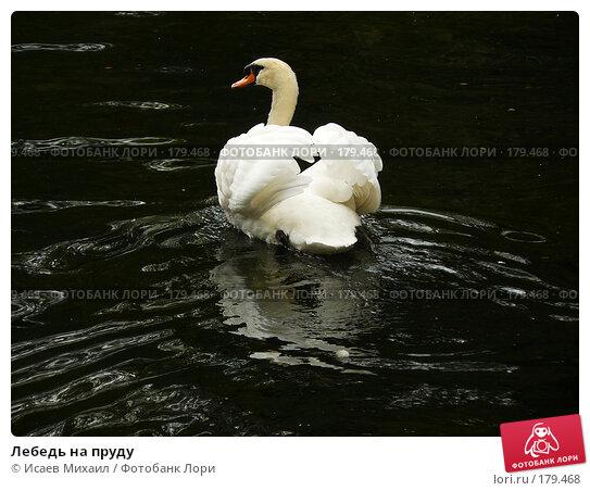 Лебедь на пруду, фото № 179468, снято 15 сентября 2007 г. (c) Исаев Михаил / Фотобанк Лори