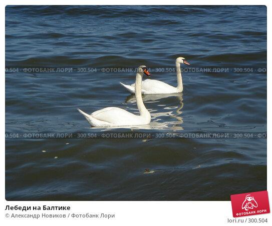 Лебеди на Балтике, фото № 300504, снято 27 апреля 2007 г. (c) Александр Новиков / Фотобанк Лори