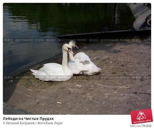 Купить «Лебеди на Чистых Прудах», фото № 39832, снято 4 августа 2003 г. (c) Евгений Батраков / Фотобанк Лори