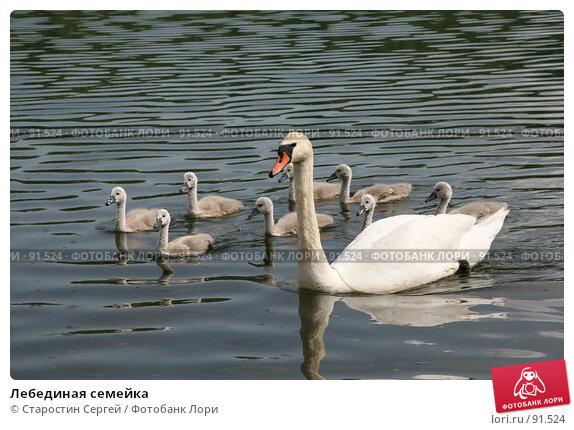 Лебединая семейка, фото № 91524, снято 31 мая 2007 г. (c) Старостин Сергей / Фотобанк Лори