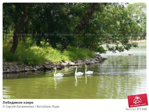 Лебединое озеро, фото № 317036, снято 8 июня 2008 г. (c) Сергей Литвиненко / Фотобанк Лори