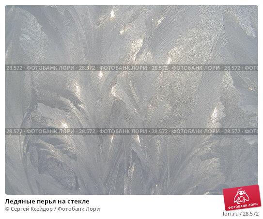 Ледяные перья на стекле, фото № 28572, снято 27 января 2007 г. (c) Сергей Ксейдор / Фотобанк Лори