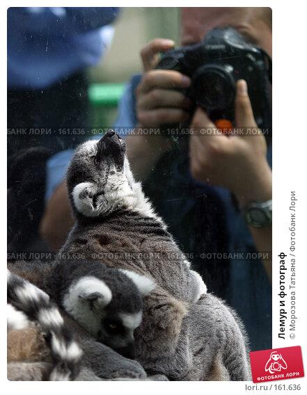 Купить «Лемур и фотограф», фото № 161636, снято 9 июля 2005 г. (c) Морозова Татьяна / Фотобанк Лори