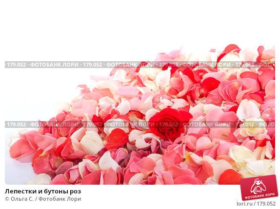 Лепестки и бутоны роз, фото № 179052, снято 28 октября 2007 г. (c) Ольга С. / Фотобанк Лори