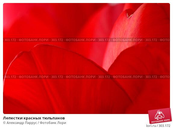 Лепестки красных тюльпанов, фото № 303172, снято 21 апреля 2008 г. (c) Александр Паррус / Фотобанк Лори