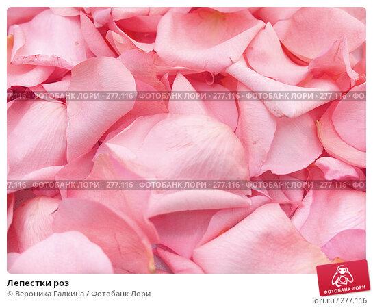 Лепестки роз, фото № 277116, снято 10 января 2008 г. (c) Вероника Галкина / Фотобанк Лори