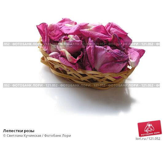 Лепестки розы, фото № 121052, снято 21 февраля 2017 г. (c) Светлана Кучинская / Фотобанк Лори