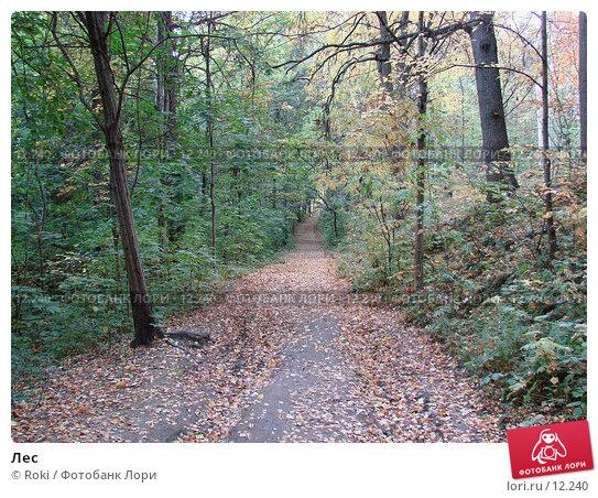 Лес, фото № 12240, снято 28 сентября 2006 г. (c) Roki / Фотобанк Лори