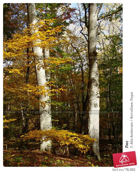 Купить «Лес», фото № 78092, снято 25 октября 2006 г. (c) Alla Andersen / Фотобанк Лори