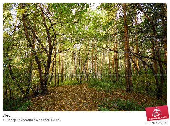 Лес, фото № 90700, снято 22 сентября 2007 г. (c) Валерия Потапова / Фотобанк Лори