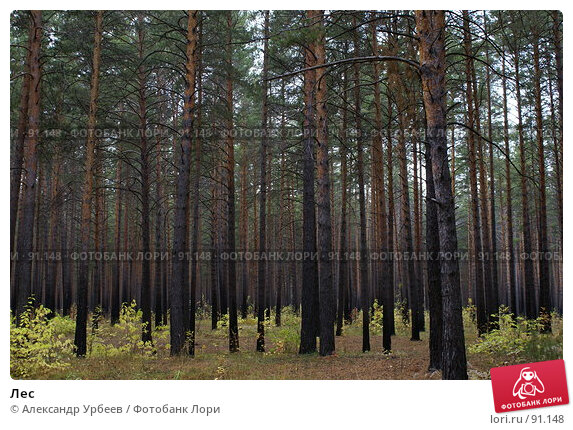 Лес, фото № 91148, снято 28 сентября 2007 г. (c) Александр Урбеев / Фотобанк Лори