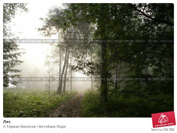 Купить «Лес», фото № 94700, снято 19 июля 2007 г. (c) Герман Филатов / Фотобанк Лори