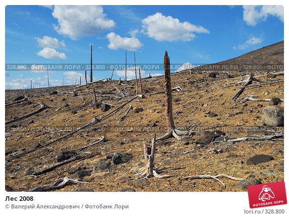 Лес 2008, фото № 328800, снято 15 июня 2008 г. (c) Валерий Александрович / Фотобанк Лори