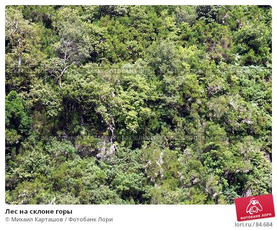 Купить «Лес на склоне горы», эксклюзивное фото № 84684, снято 2 августа 2007 г. (c) Михаил Карташов / Фотобанк Лори