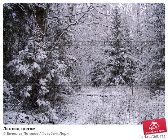 Лес под снегом, фото № 263172, снято 4 ноября 2007 г. (c) Вячеслав Потапов / Фотобанк Лори