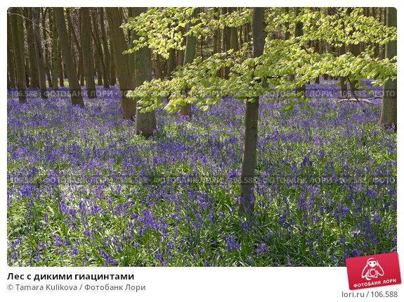 Лес с дикими гиацинтами, фото № 106588, снято 18 апреля 2007 г. (c) Tamara Kulikova / Фотобанк Лори