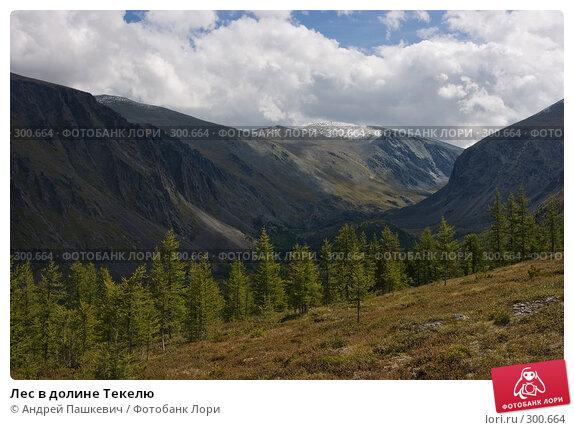 Купить «Лес в долине Текелю», фото № 300664, снято 17 декабря 2017 г. (c) Андрей Пашкевич / Фотобанк Лори
