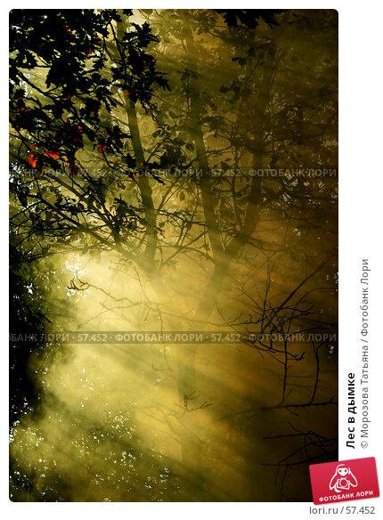 Купить «Лес в дымке», фото № 57452, снято 22 апреля 2018 г. (c) Морозова Татьяна / Фотобанк Лори
