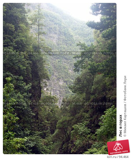 Лес в горах, эксклюзивное фото № 94464, снято 2 августа 2007 г. (c) Михаил Карташов / Фотобанк Лори