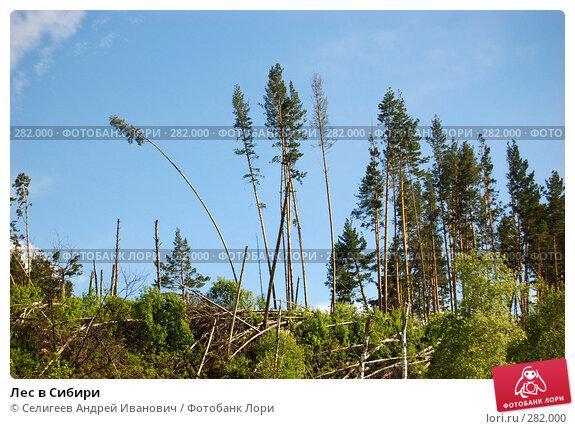 Лес в Сибири, фото № 282000, снято 10 июня 2007 г. (c) Селигеев Андрей Иванович / Фотобанк Лори