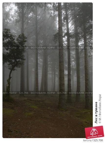 Лес в тумане, фото № 325708, снято 20 октября 2016 г. (c) Михаил / Фотобанк Лори
