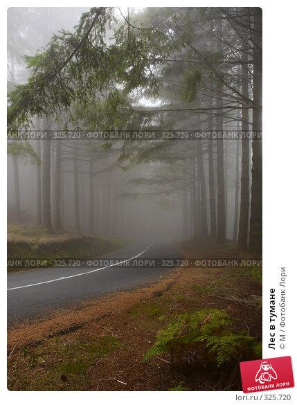 Лес в тумане, фото № 325720, снято 20 января 2017 г. (c) Михаил / Фотобанк Лори