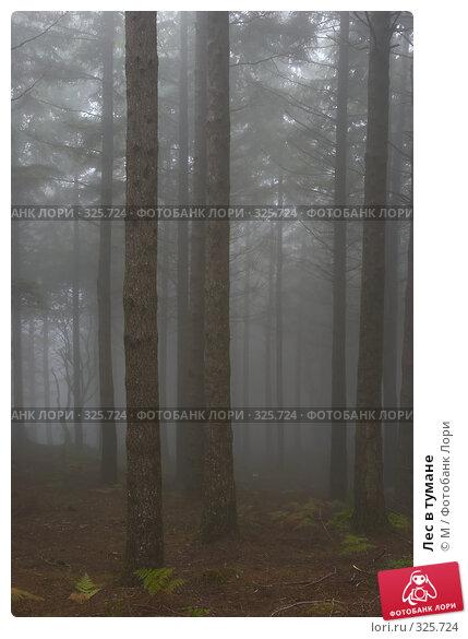 Купить «Лес в тумане», фото № 325724, снято 24 апреля 2018 г. (c) М / Фотобанк Лори