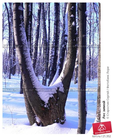 Купить «Лес зимой», фото № 21352, снято 20 ноября 2017 г. (c) Старостин Сергей / Фотобанк Лори