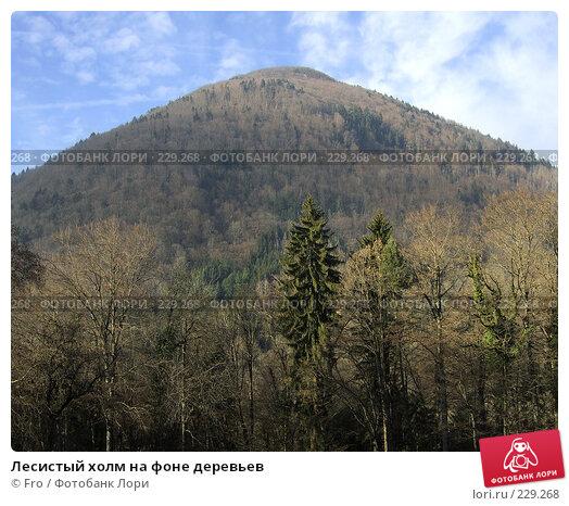 Лесистый холм на фоне деревьев, фото № 229268, снято 29 января 2008 г. (c) Fro / Фотобанк Лори